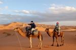 kamelenritje