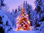 white_christmas_iceland_45