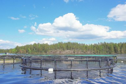 Aquaculture: Clear Water Thanks to Cork