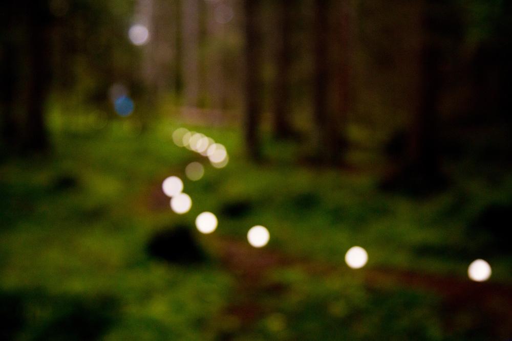 light installation Norwegian forrest