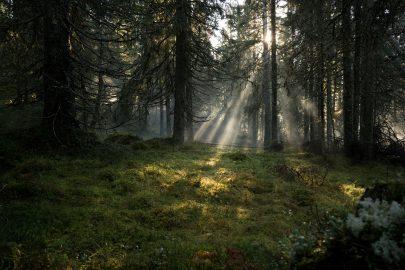 Allemansrätten Visit Sweden