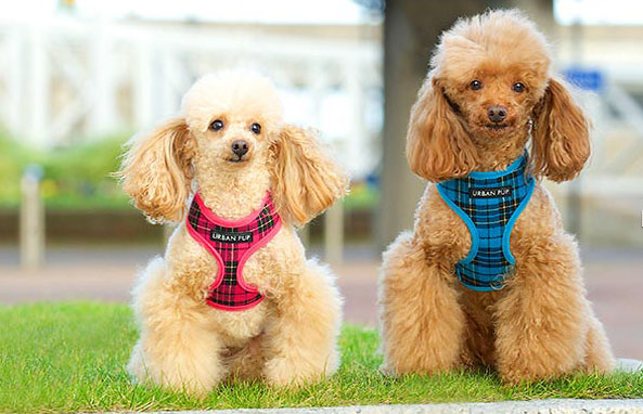 High fashion dog clothes: It's fashion but not as we know it